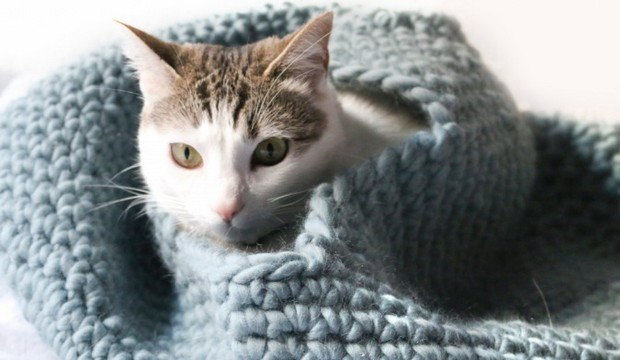 Awesome Diy Crochet Cat Beds Free Patterns