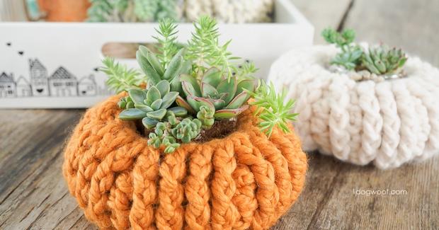 crochet pumpkin succulent